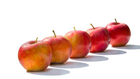 Five red apples  on white background Stock Image
