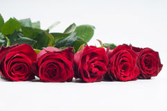 Five red roses Stock Image