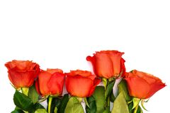Five red roses on a white background. Colorful roses with green leaves. Isolated flowers laid out in a row. View from royalty free stock photo