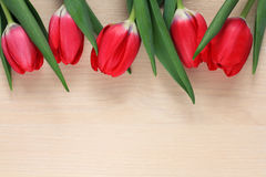 Five red tulips Stock Photo
