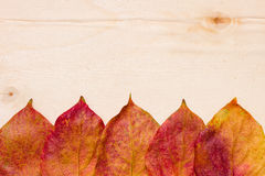 Five red-yellow leaves on a board Stock Photo