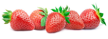 Five ripe strawberries isolated Royalty Free Stock Images