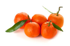 Five ripe tangerines Royalty Free Stock Photos