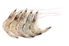 Five river prawns isolated on white. It is five river prawns isolated on white Royalty Free Stock Photos