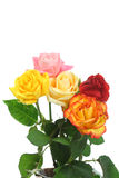Five Roses. Royalty Free Stock Photos
