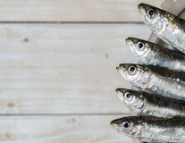 Five sardines Stock Photography