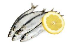 Five sardines Stock Image