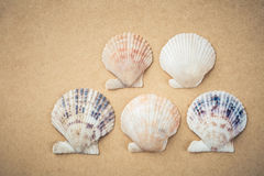 Five scallop shells Royalty Free Stock Photography