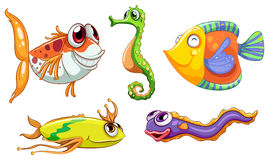 Five sea creatures Stock Image