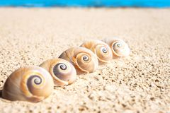 Five sea shells on the beach sand. Landsnail. Outdoors close-up. Five sea shells on the beach sand. Landsnail. Summertime outdoors close-up horizontal image stock photos