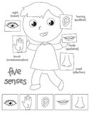 Five senses boy coloring illustration Stock Images