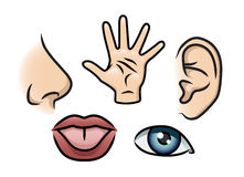 The Five Senses. A cartoon illustration depicting the 5 senses. Smell, touch, hearing, taste and sight vector illustration