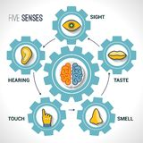 Five senses concept. With human organs icons and brain in cogwheels vector illustration Royalty Free Stock Photo