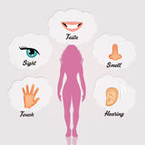 Five senses Stock Photos