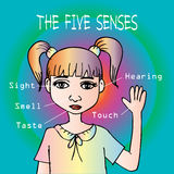 Five senses  educational concept Royalty Free Stock Photography