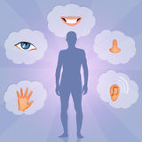 Five Senses. Funny illustration of five senses Royalty Free Stock Photo