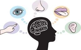 Five Senses and Human Brain Illustration stock illustration