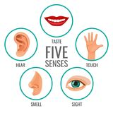 Five senses of human perception poster icons. Taste and hear. Touch and smell, sight human feelings. Body parts set in circles vector illustration royalty free illustration