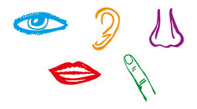 Five senses icon set - Vector. Illustration Stock Image