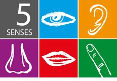 Five senses icon set - Vector Royalty Free Stock Photos