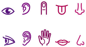 Five senses icons Stock Photos