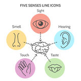 Five senses line icons. Human ear and eye symbols, nose and mouth outline vector signs Royalty Free Stock Photos