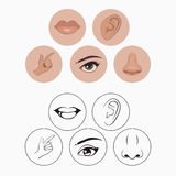 Five senses,. Nose lips eye ear and hand Stock Photo