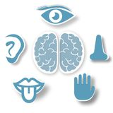 Human five senses educational poster stock illustration