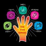 The Five Senses. The Five Sense illustration, set Stock Photos