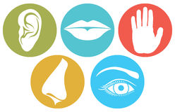 Five senses symbols, five senses vector illustration. 5 senses: smell, touch, hearing, taste and sight Stock Photos