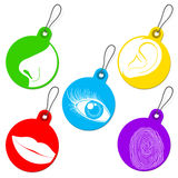 Five senses tag set. Colorful five senses tag set Stock Photos