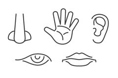 Five senses vector icons set isolated white Royalty Free Stock Images
