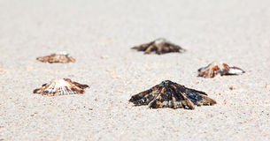Five Shells lying on the beach Royalty Free Stock Image
