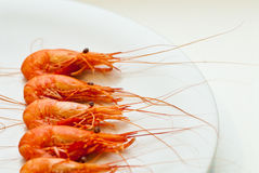 Five Shrimp of Galicia stock image