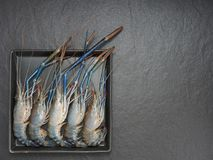 Five shrimp or prawn on the black rectangle plate with dark background. Used as ingredient for Tom Yum, Thai spicy and sour soup, and other Asian dishes Stock Photography