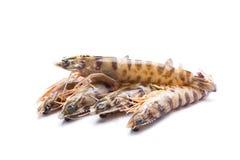 Five shrimp Royalty Free Stock Photography