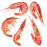 Five shrimps. File contains clipping path. stock image