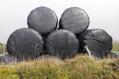 Five Silage Bales. Stack of five silage bales, wrapped in black plastic, on small bank Royalty Free Stock Image