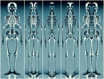 Five Silver Blue Alien Skeleton 01 Royalty Free Stock Photography
