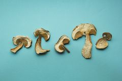 Five slices of dry boletus mushrooms  on blue background royalty free stock images