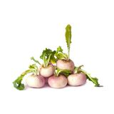 Five small baby turnips in a row isolated on white Stock Images