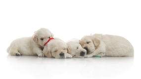 Five small cute dog puppy Stock Photo