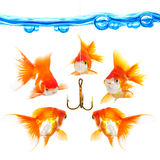 Five small fishes at a hook Stock Photos