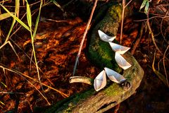 Five small paper boats lie on a mossy tree above the water Stock Photo