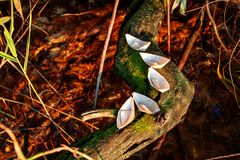 Five small paper boats lie on a mossy tree above the water Royalty Free Stock Photography
