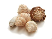 Five spiral seashells. Five seashells with spirals, olive shell, banded tulip, lighting whelk, Florida fighting conch Royalty Free Stock Photos