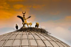 Five storks in a stork nest on dome of a mosque in Turkey stock photo