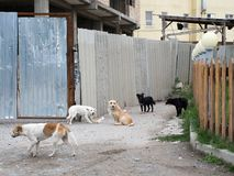 Five stray dogs, walking on the street. royalty free stock images