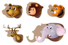 Five stuffed heads of animals Stock Image