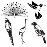 Five stylized bird illustrations Stock Photos
